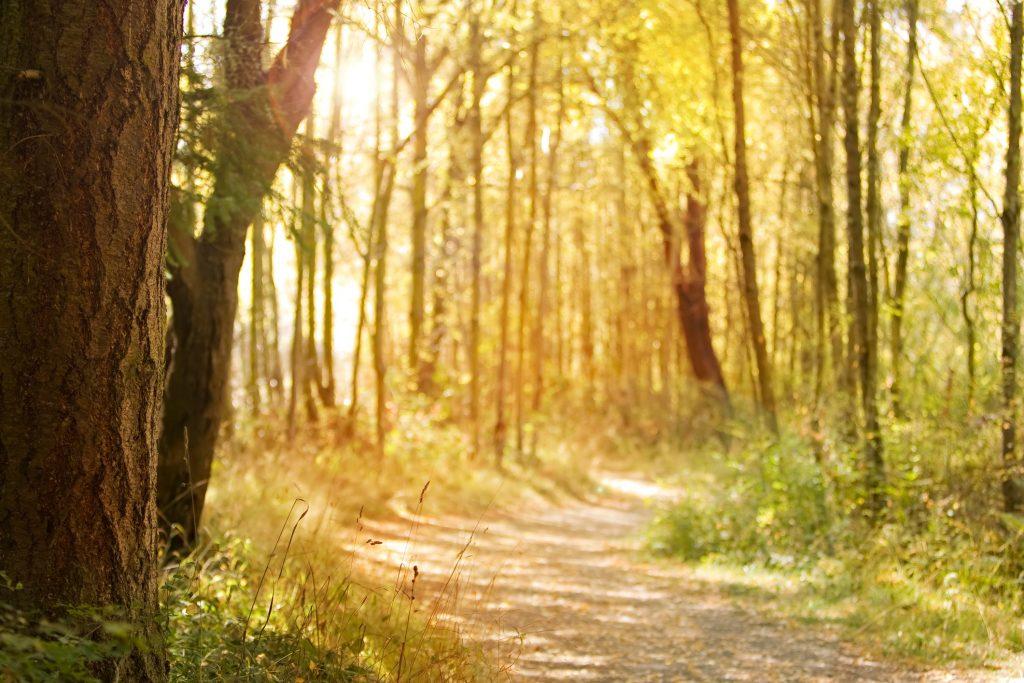 Je eigen pad volgen